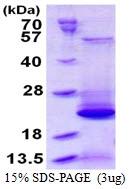 AR50352PU-N - BLOC-1 subunit 2