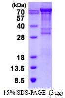 AR50397PU-N - CD106 / VCAM1
