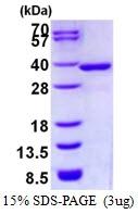 AR50410PU-N - NMRAL1