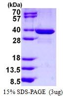 AR50413PU-N - Spindlin 1 / SPIN1