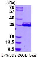 AR50428PU-N - HSCB / DNAJC20 / HSC20