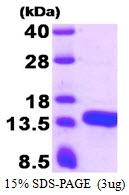 AR50454PU-N - ATPase inhibitor ATPIF1