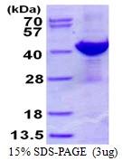 AR50457PU-N - ADPRH / ARH1
