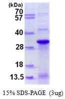 AR50460PU-N - DNAJC12 / JDP1