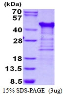 AR50465PU-N - TTC1 / TPR1