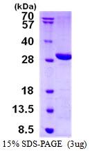 AR50470PU-N - LYPLAL1