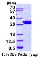 AR50481PU-N - GCLM / GLCLR