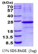 AR50482PU-N - Ephrin-B3