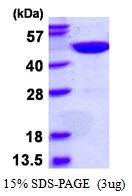 AR50484PU-N - GTPBP9 / OLA1