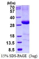 AR50488PU-N - C4b-binding protein beta