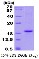 AR50501PU-N - Hemoglobin alpha