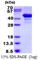 AR50519PU-N - Arfaptin-2