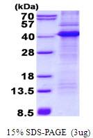 AR50530PU-N - CD68