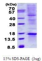 AR50532PU-N - TIAF1