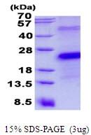 AR50534PU-N - CD27