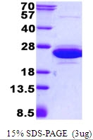 AR50537PU-N - CNRIP1