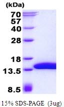 AR50539PU-N - SH3BGRL3