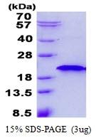 AR50541PU-N - RNF181