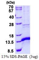 AR50545PU-N - CISD1