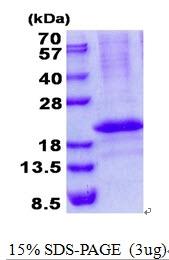AR50635PU-N - Calcipressin-3