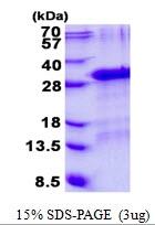 AR50686PU-N - Hepatopoietin