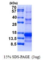 AR50722PU-N - Inhibin alpha / INHA