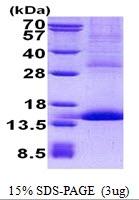 AR50743PU-N - CD42a / GPIX