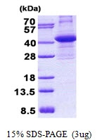 AR50754PU-N - Anamorsin
