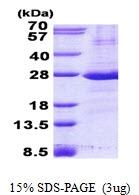 AR50760PU-N - CD32 / FcRII-a