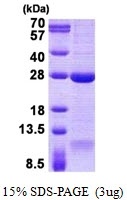 AR50782PU-N - DNAL1