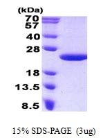 AR50819PU-N - MCTS1