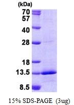 AR50853PU-N - Complex I subunit NDUFB4