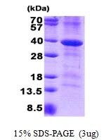 AR50860PU-N - CD46 / MCP