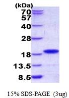 AR50885PU-N - Gastric inhibitory polypeptide