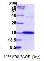 AR50887PU-N - RNASE7