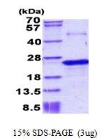 AR50893PU-N - Nociceptin