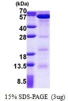AR50978PU-N - Polycomb protein EED