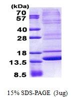 AR50986PU-N - Neuromedin B