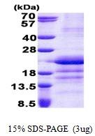 AR51007PU-N - GatC-like protein