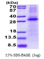 AR51011PU-N - RCHY1 / PIRH2