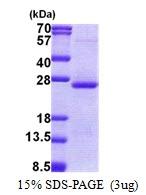 AR51042PU-N - ORM2 / AGP2