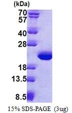 AR51053PU-N - TPPP3