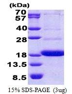 AR51056PU-N - CD300A / CMRF35H