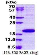 AR51060PU-N - IL1F9 / IL1H1