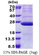 AR51072PU-N - ATP synthase subunit d