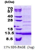 AR51082PU-N - CD59