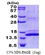 AR51086PU-N - CMC1