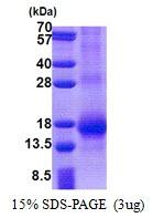 AR51110PU-N - RNF7