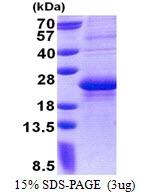 AR51113PU-N - CD7