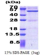 AR51127PU-N - ASCC1